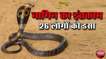 snake-bite