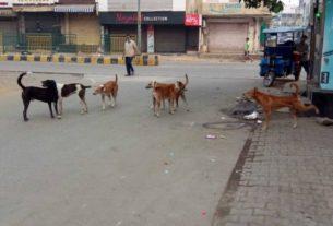terror-of-dogs